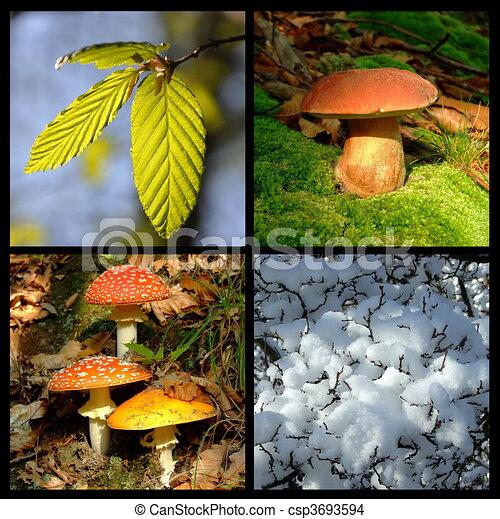 季節, 4 - csp3693594