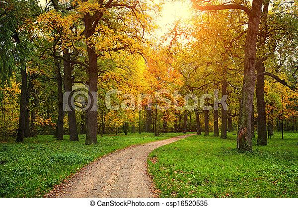 季节, 公园, 小路, 落下 - csp16520535