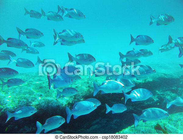 学校, fish - csp18083402