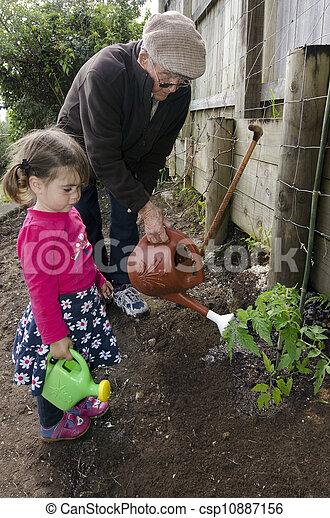 孫, 植物, トマト, 植えつけ, おじいさん - csp10887156