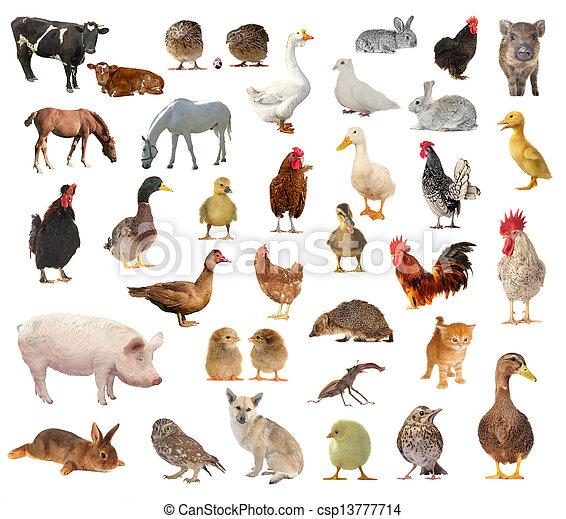 家畜 - csp13777714