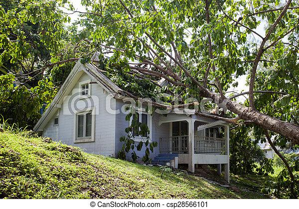 家, 損害, 木, 落ちる, 嵐, 懸命に, 後で - csp28566101