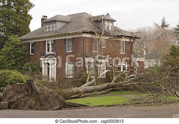 家, 木, 損害 - csp0503913