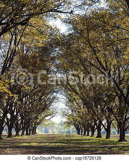 小樹林, 高, 胡桃, 行 - csp18726126