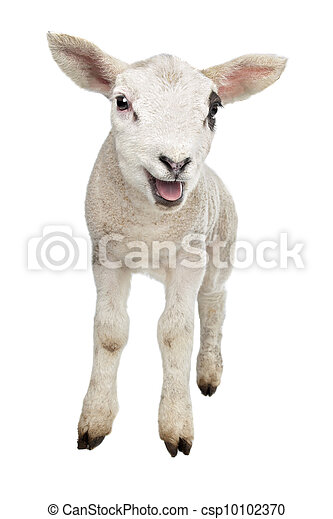 可爱小羊手机壁纸