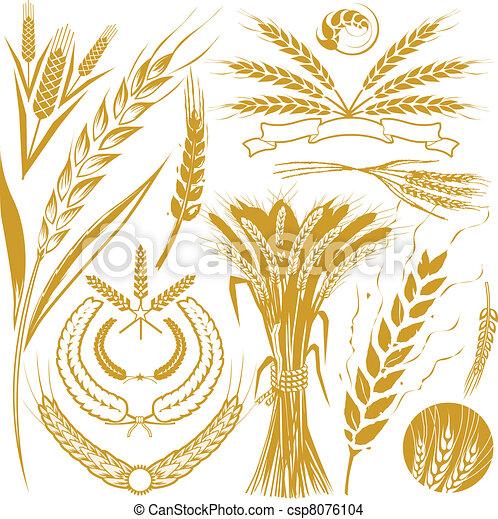 小麦, コレクション - csp8076104