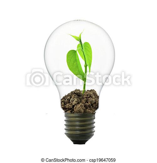 小, 光, 植物, 燈泡 - csp19647059