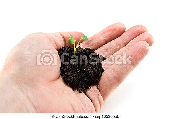 小, 植物 - csp16536556