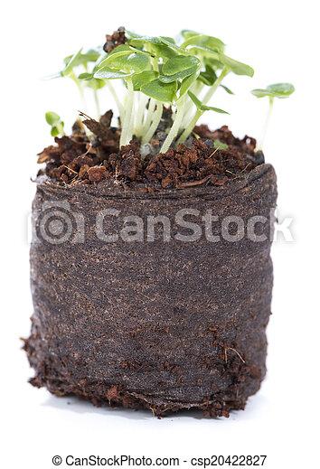 小, 植物 - csp20422827