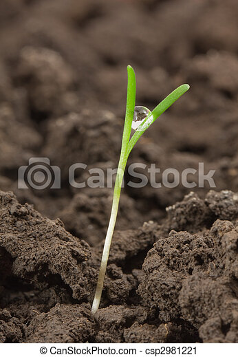小, 植物 - csp2981221