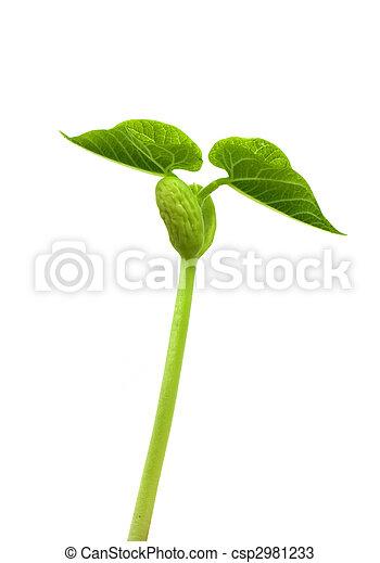 小, 植物 - csp2981233