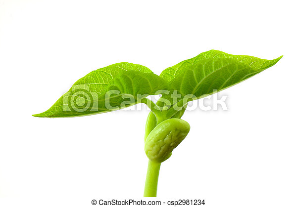 小, 植物 - csp2981234