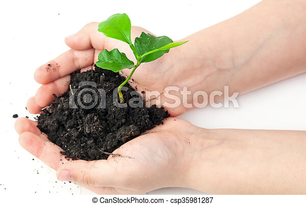 小, 植物 - csp35981287