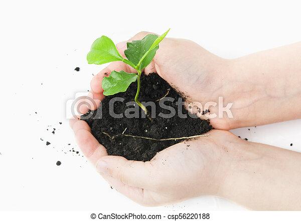 小, 植物 - csp56220188