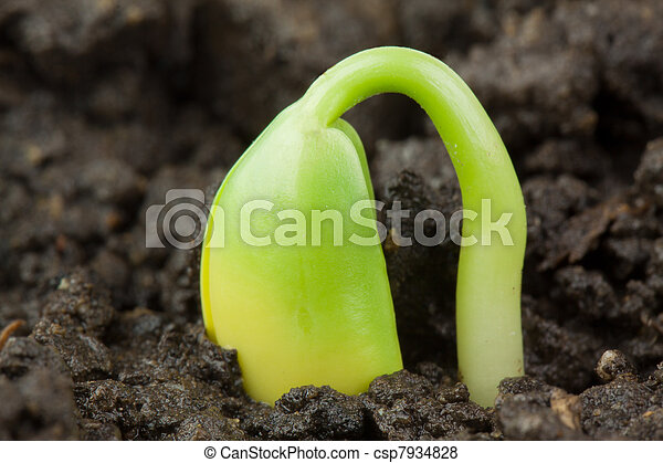 小, 植物 - csp7934828