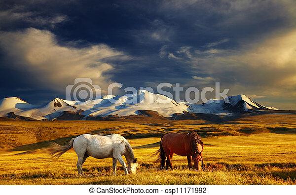 山の景色 - csp11171992
