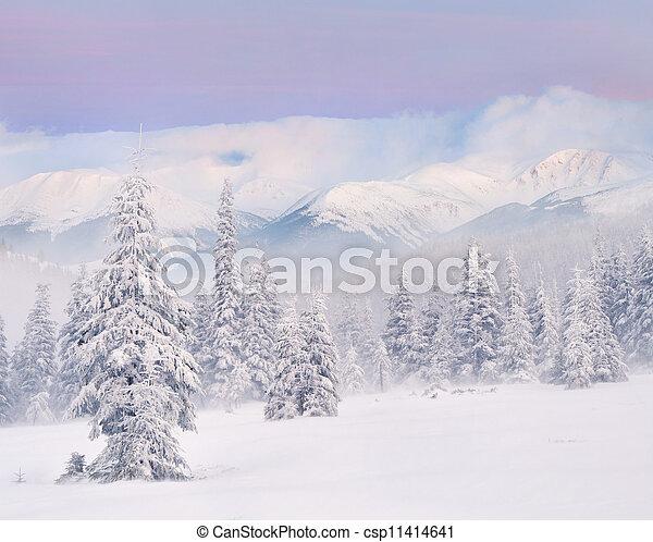 山。, 冬季, 日出, 暴风雪 - csp11414641