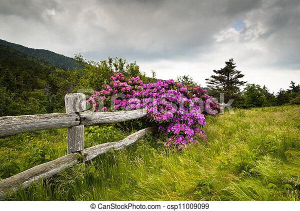 山, 杜鹃花, 花, 栅栏, 性质, 木制, 公园, 缺口, 声明, 花毛, 在户外, carvers, 花 - csp11009099