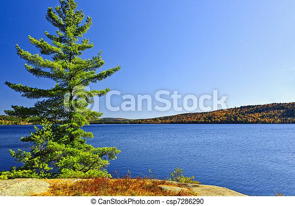 岸, 树, 湖, 松树 - csp7286290