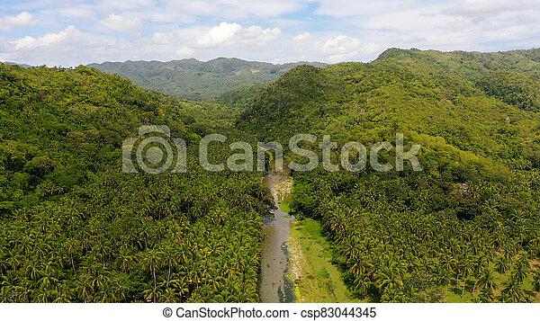 川, 山, 山, leyte, rainforest, 島, 航空写真, 風景, フィリピン。, ビュー。 - csp83044345