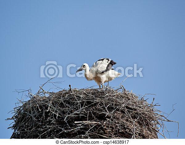 巣, 赤ん坊の 鳥, コウノトリ, 白 - csp14638917