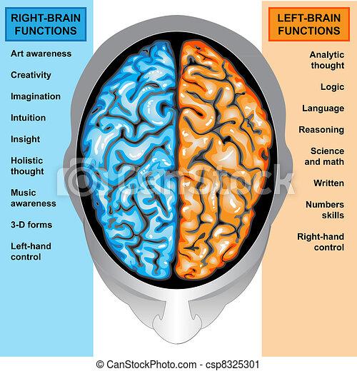 左, 脳, 権利, 人間, 機能 - csp8325301