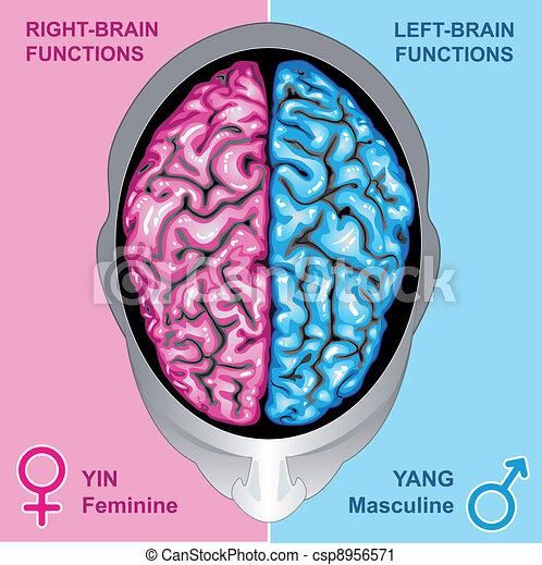 左, 脳, 権利, 人間, 機能 - csp8956571