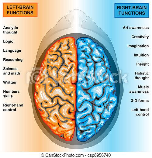 左, 脳, 権利, 人間, 機能 - csp8956740