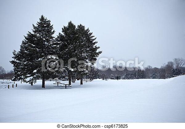 常緑樹, 雪 - csp6173825