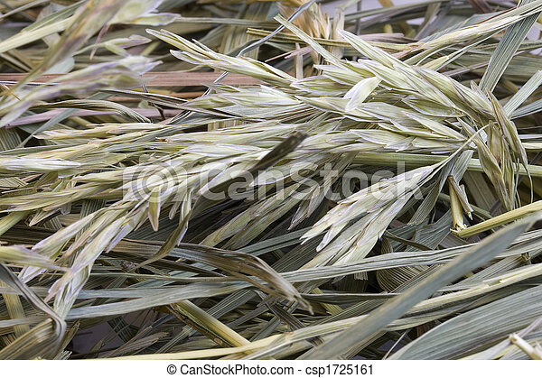 干草, 草, 背景 - csp1725161