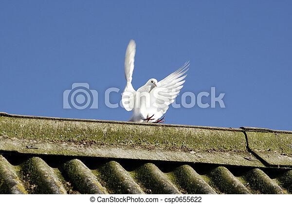 平和, 翼 - csp0655622