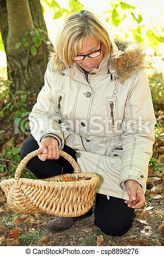 年長の 女性, 収集, ヘイゼルナッツ - csp8898276