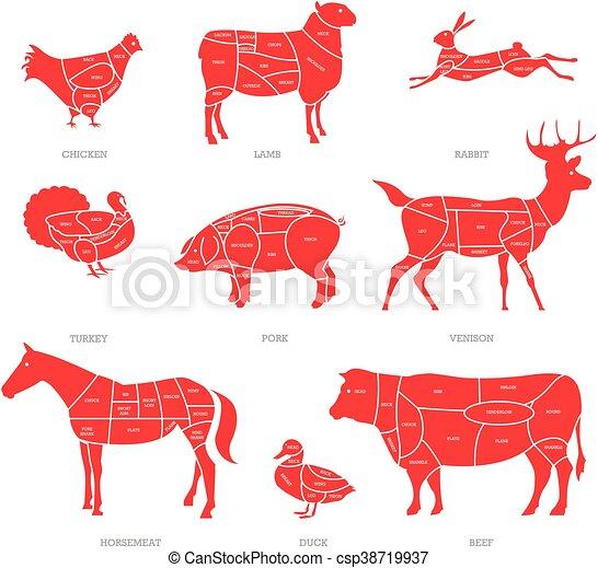 店, 子羊, 概念, illustration., 肉屋, 牛肉, 図, cuts., 部分, ベクトル, 動物, ポーク, 肉 - csp38719937