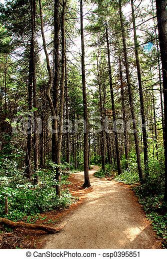形跡, 森林 - csp0395851
