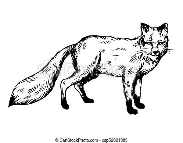 彫版 ベクトル キツネ 動物 イラスト 彫版 スタイル Illustration