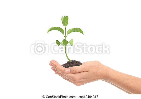 很少, 婦女, 成長, 植物, 手 - csp12404317