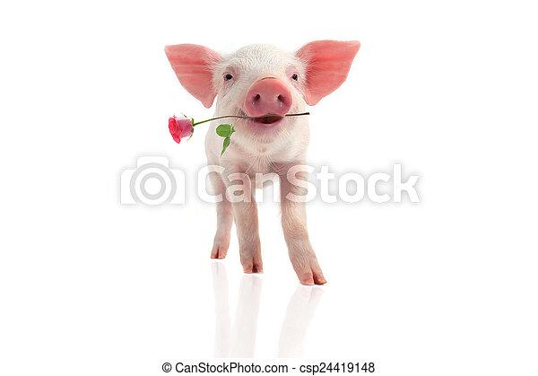 微笑, 豬 - csp24419148