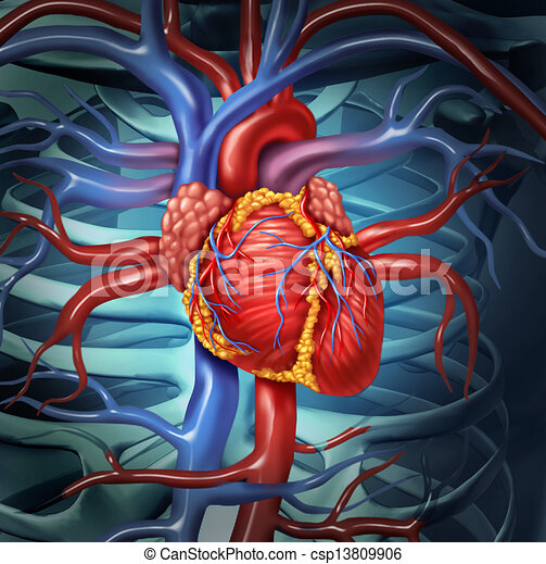 心臓血管である, 心, 人間 - csp13809906