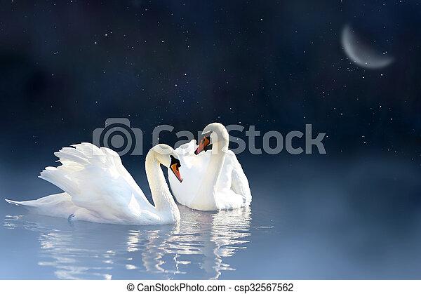 恋人, 白鳥 - csp32567562