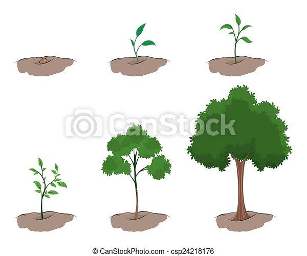 成長, 樹, 階段 - csp24218176
