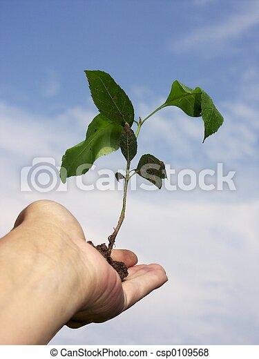 成長 - csp0109568