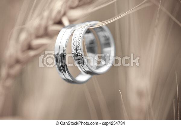 戒指, 小麥, 婚禮 - csp4254734