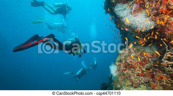 探検, グループ, 珊瑚, スキューバ, 砂洲, ダイバー - csp44701110