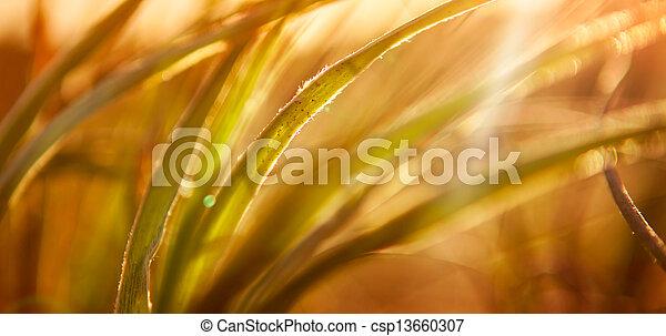摘要, 草, 背景 - csp13660307