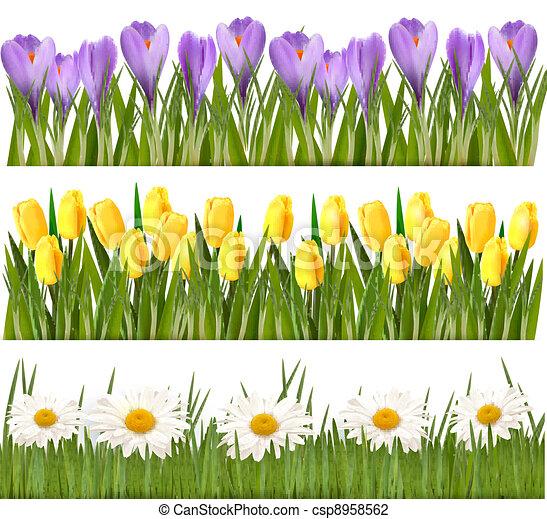 新たに, ボーダー, 花, 春 - csp8958562