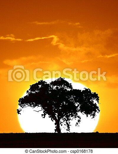 日没, 木 - csp0168178