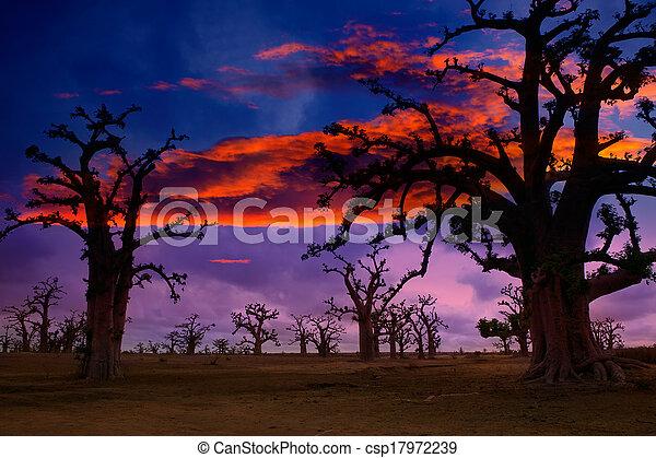 日没, baobab, アフリカ, 木, カラフルである - csp17972239