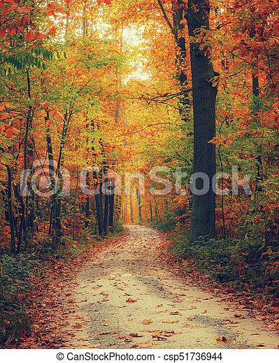 明るい, 森林, 秋 - csp51736944