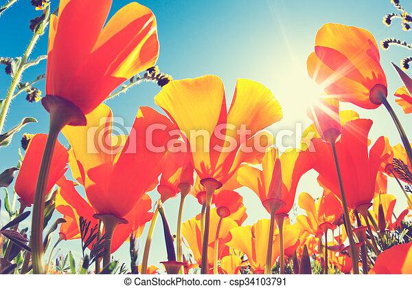 春の花 - csp34103791