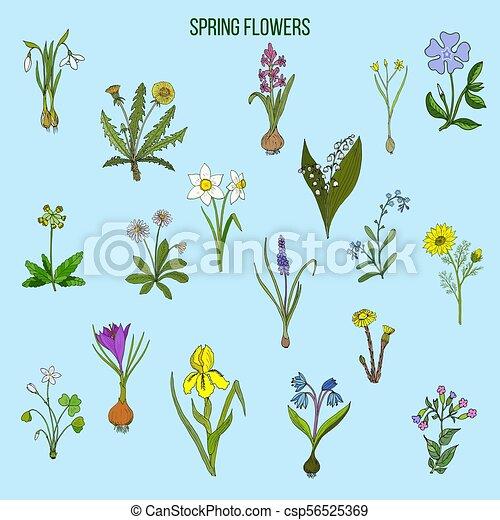 春の花 セット 春 Set イラスト 手 ベクトル 引かれる 花 植物